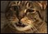 :cat10: