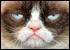 :catgrumpy: