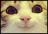 :cathappy:
