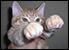 :catpew: