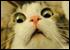 :catshocked:
