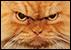 :madcat: